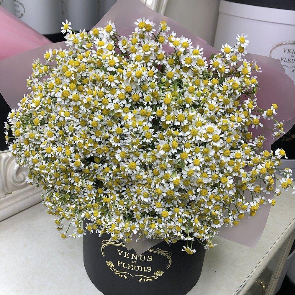 Букет ромашек Букеты Белые Venus in Fleurs