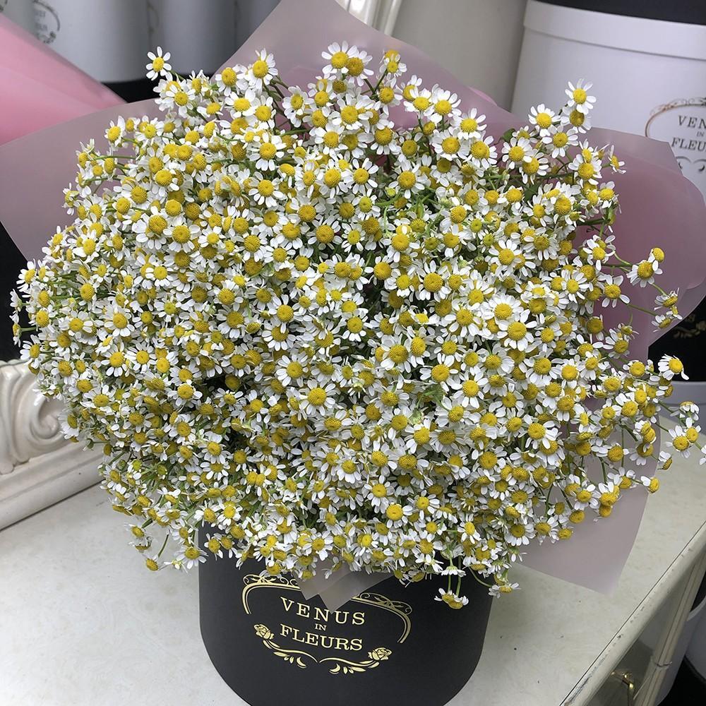 51 ромашка в букете Букет из 51 розы Белые Venus in Fleurs