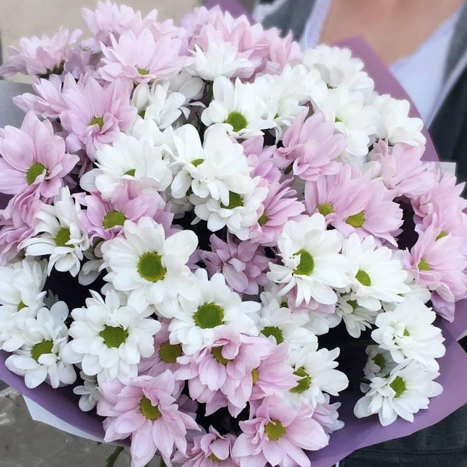 29 бело-фиолетовых хризантем в букете Хризантемы Белые