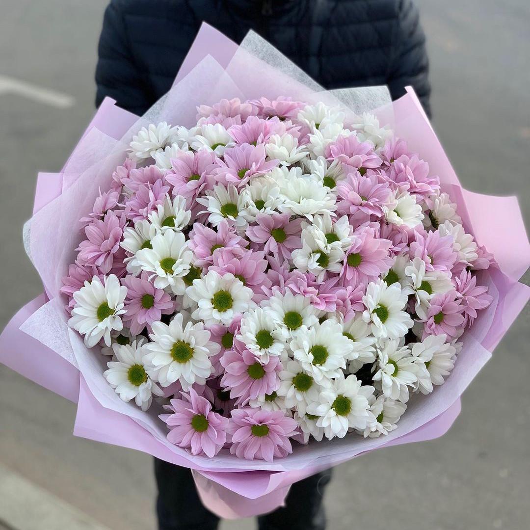 41 бело-розовая ромашковая хризантема в букете Хризантемы Розовые