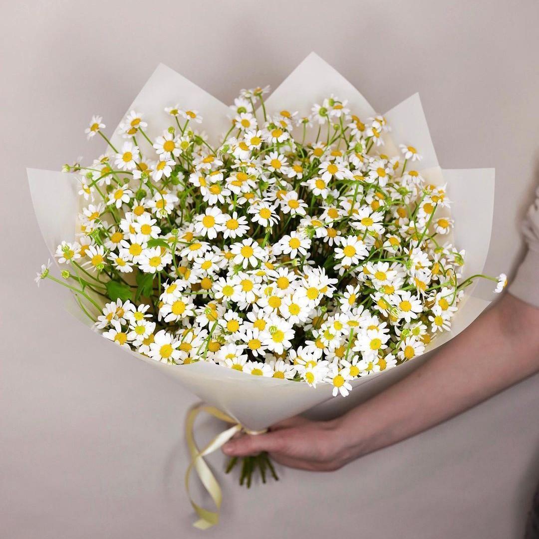 15 кустовых ромашек в букете Ромашки Белые