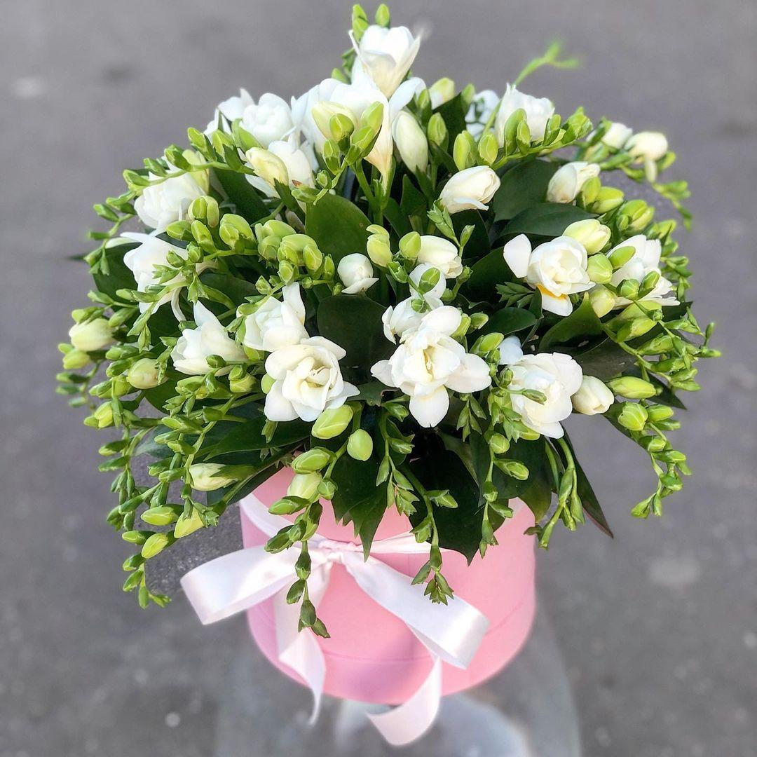 51 фрезия белая в коробке Фрезии Белые Venus in Fleurs