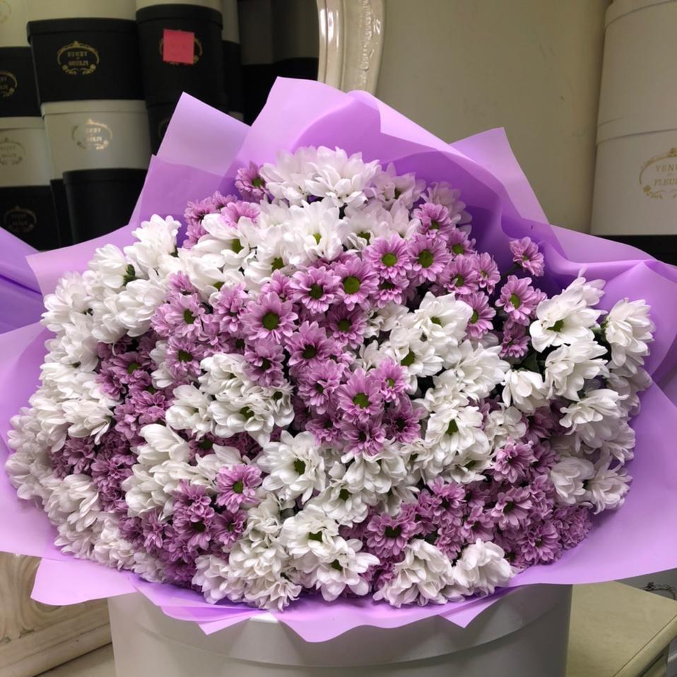 41 бело-фиолетовая хризантема в букете Хризантемы Розовые