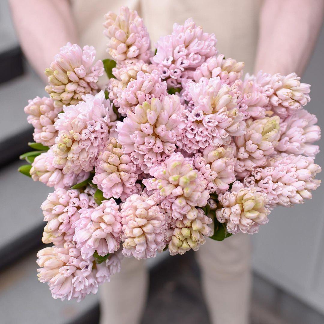 19 розовых гиацинт в виде сердца Гиацинты Розовые Venus in Fleurs