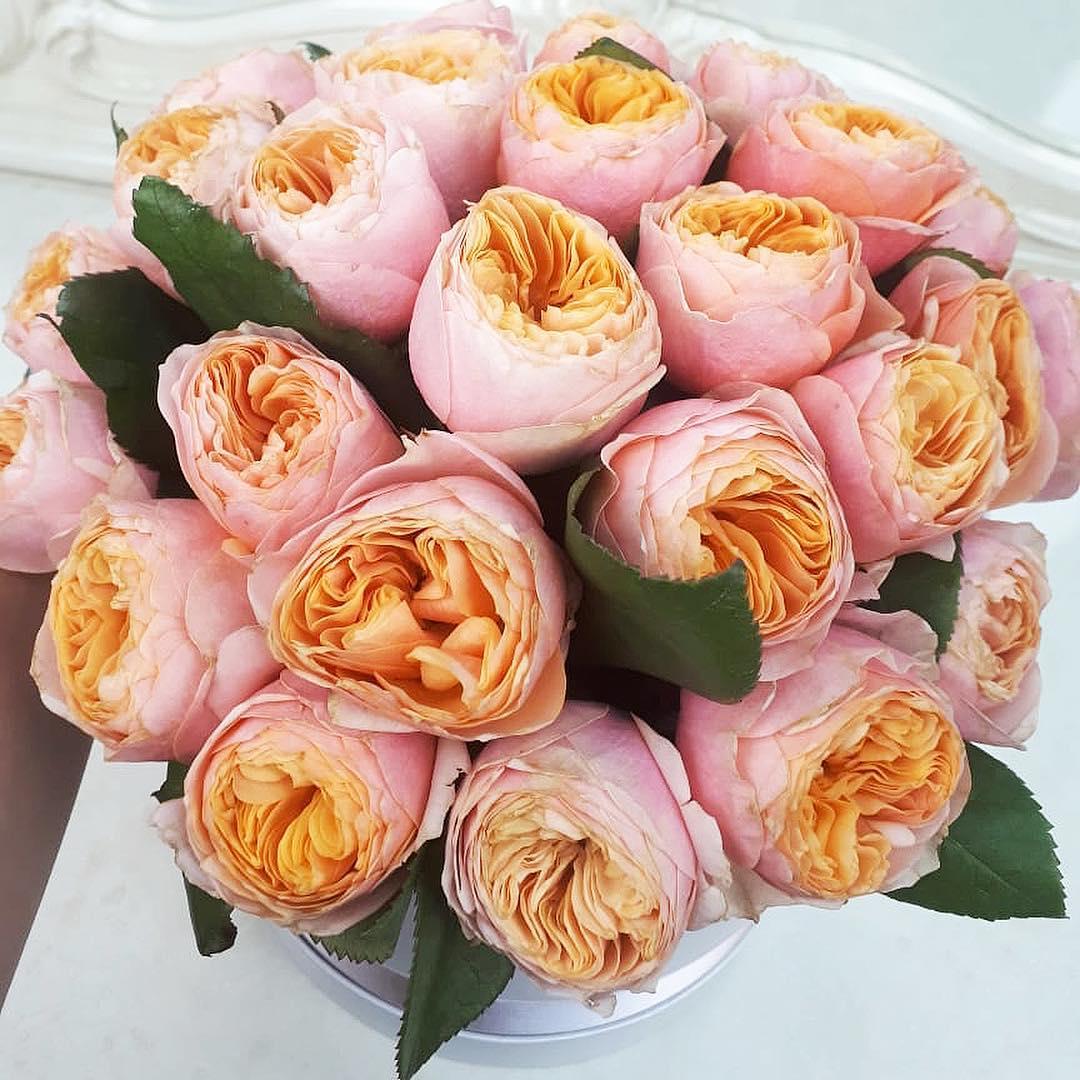 Пионовидные розы в коробке - кофейные Розы в коробке Розовые Venus in Fleurs
