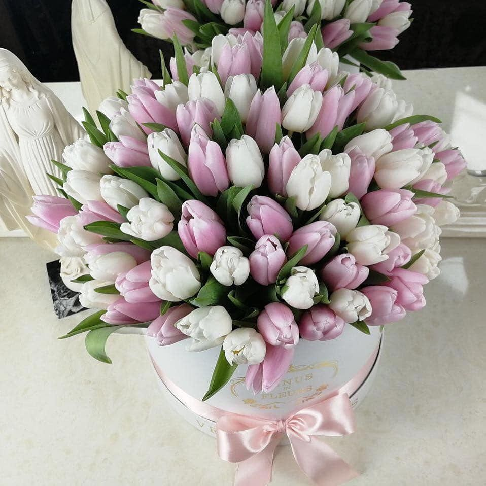 101 нежный тюльпан в коробке Бизнес-букеты Розовые Venus in Fleurs